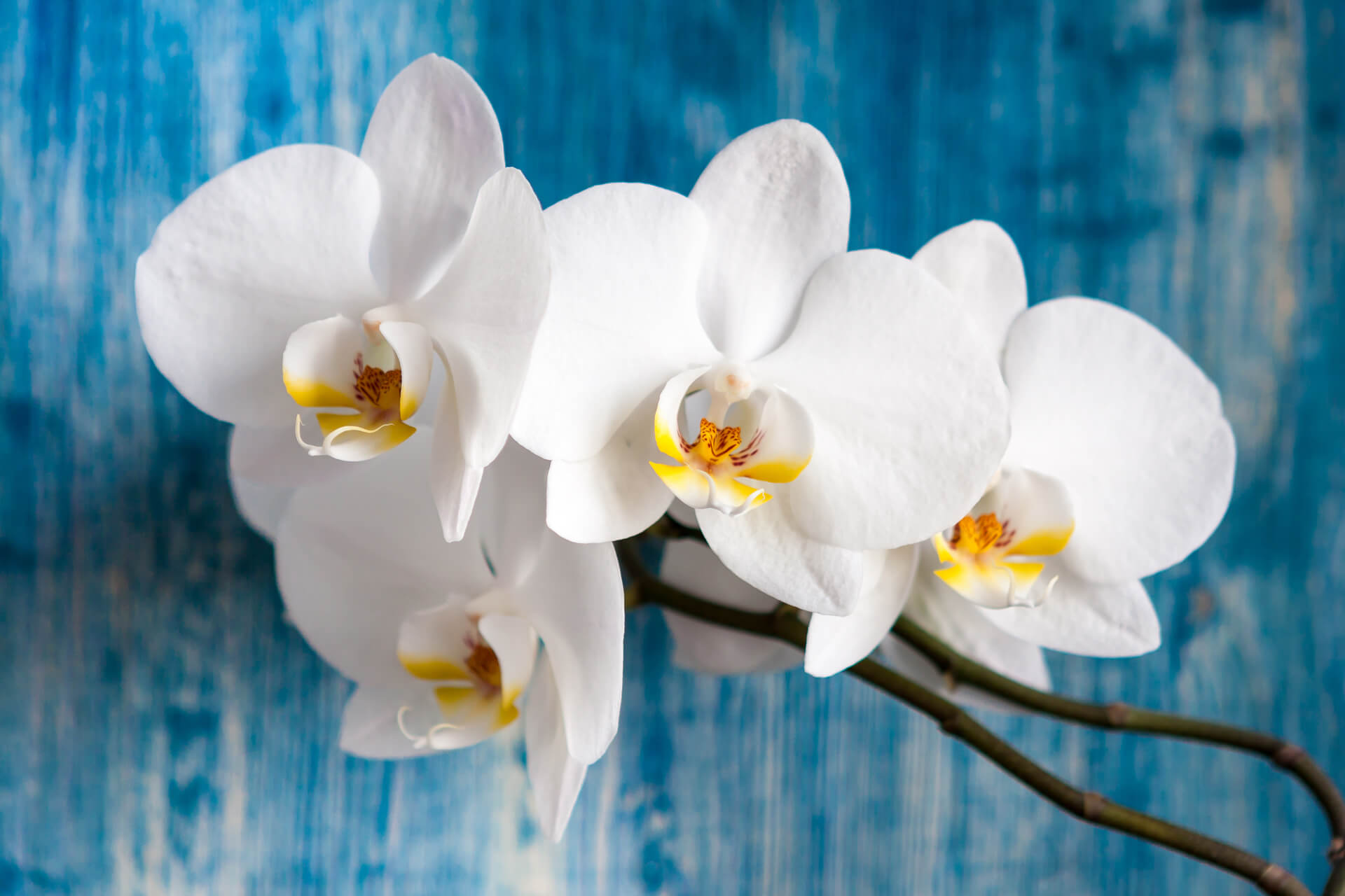 finestre-esposte-a-est-orchidee
