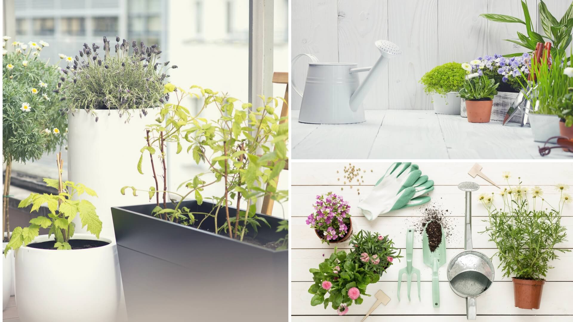 scegliere le piante per il terrazzo