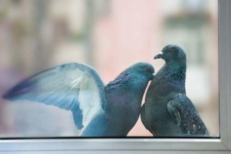 Tenere lontano piccioni