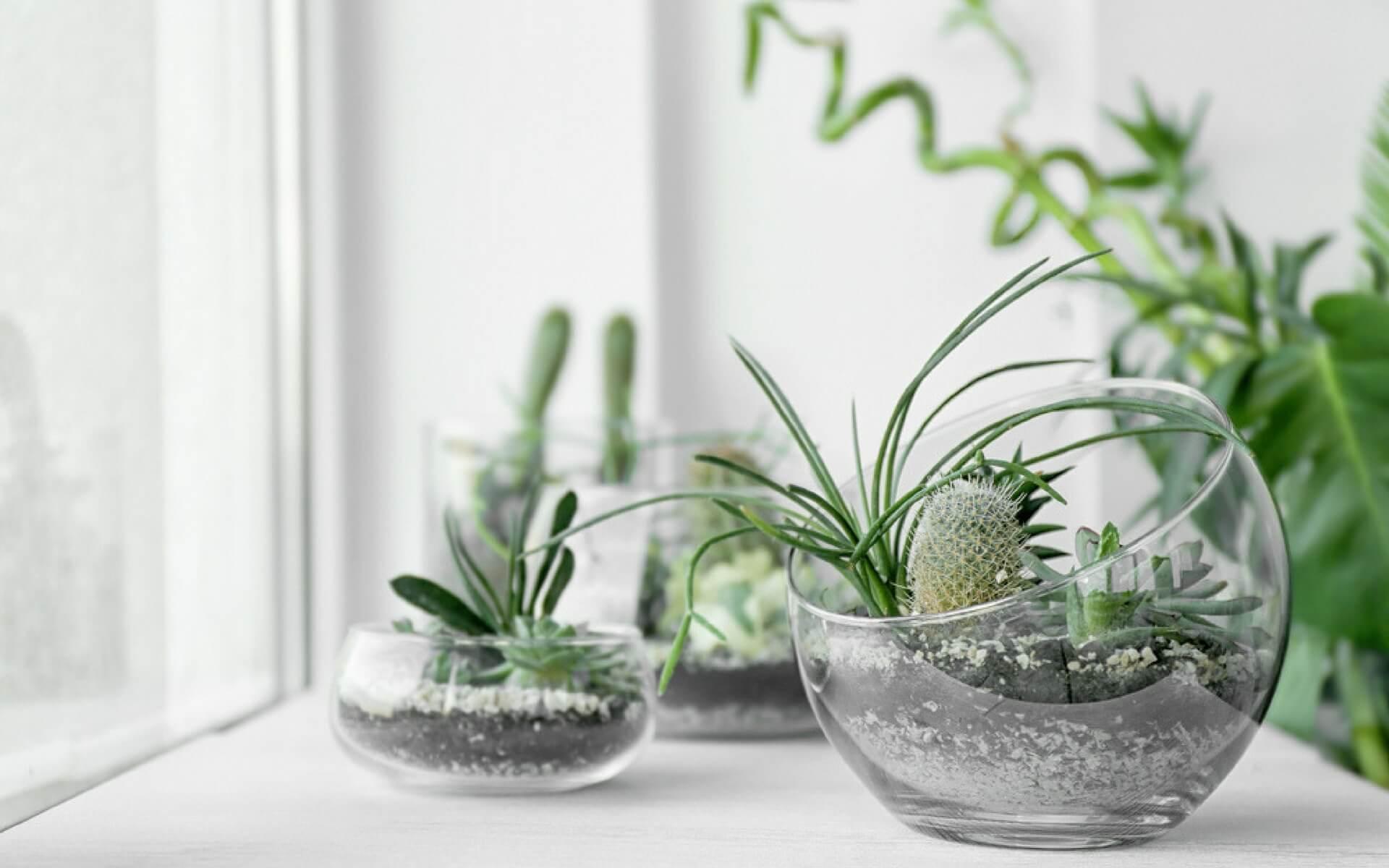 decorare il davanzale con terrarium e bolle di vetro