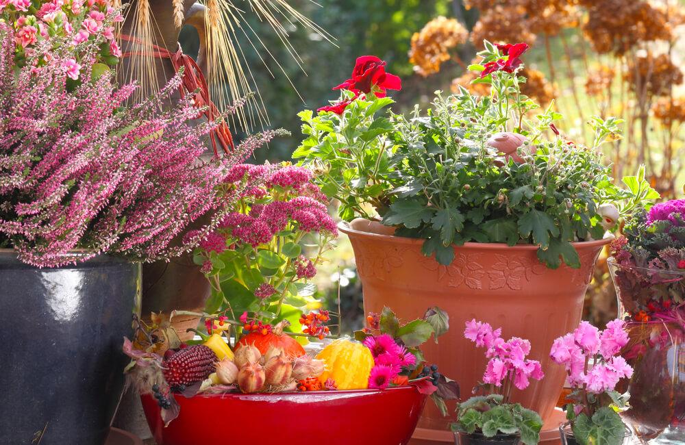 Awesome terrazzo fiorito tutto l anno photos idee for Giardini fioriti tutto l anno