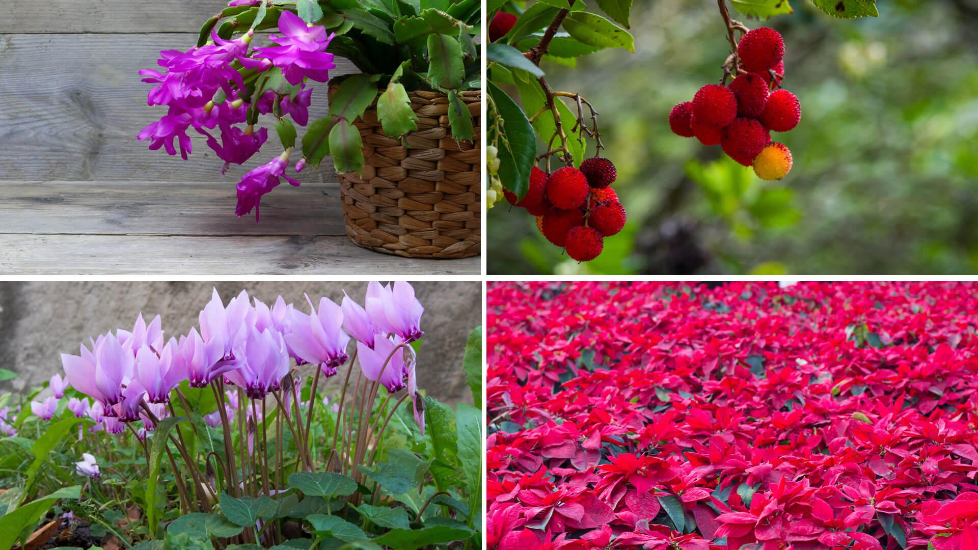 piante a lunga fioritura