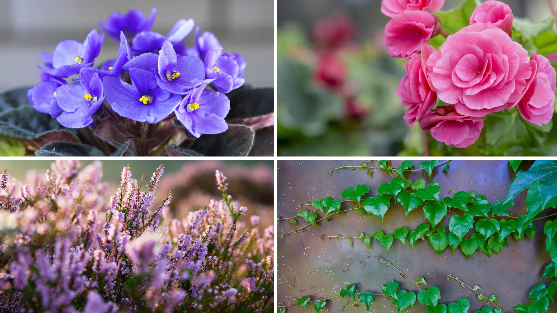 Piante Che Fioriscono Tutta Estate terrazzo fiorito tutto l'anno | blog oknoplast