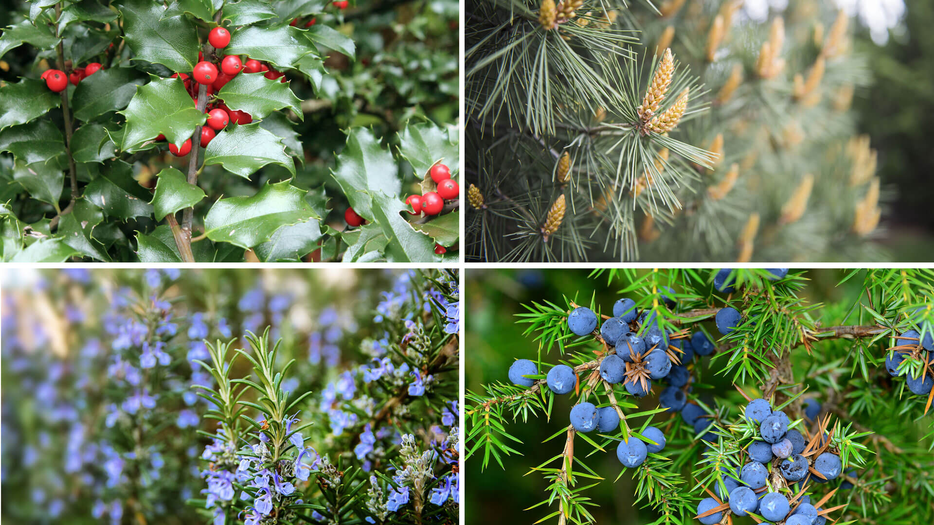 Terrazzo fiorito tutto l anno blog oknoplast for Piante da balcone tutto l anno