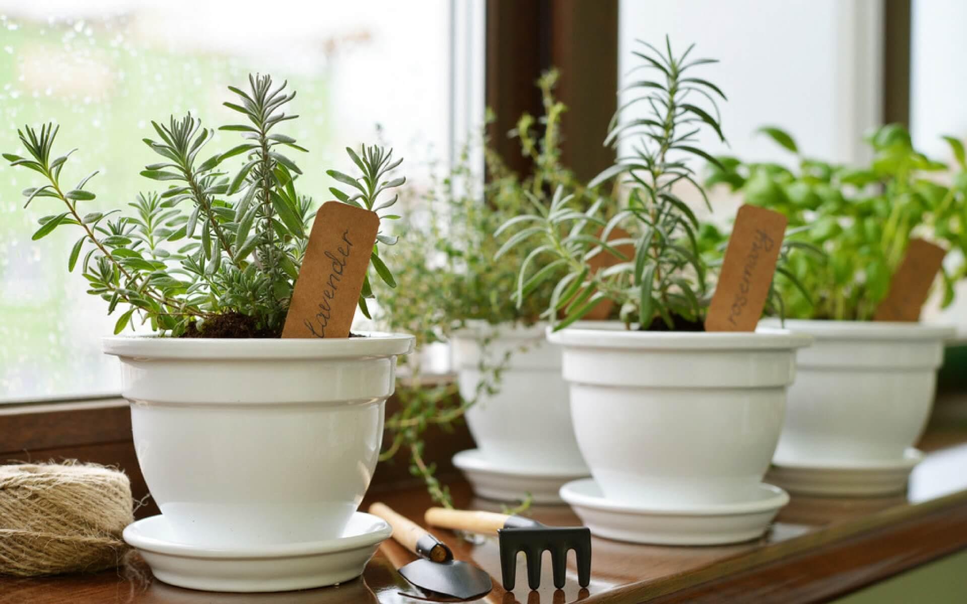 Quali sono le piante aromatiche e i fiori tipici di una casa provenzale