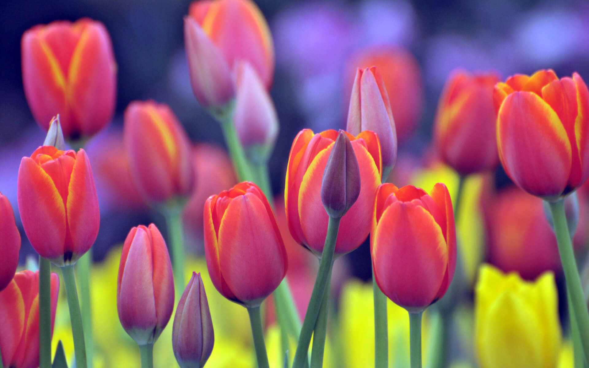 Per combattere le allergie bisogna evitare di entrare in contatto con piante che diffondo pollini, anche quelle piante che si tengono in casa