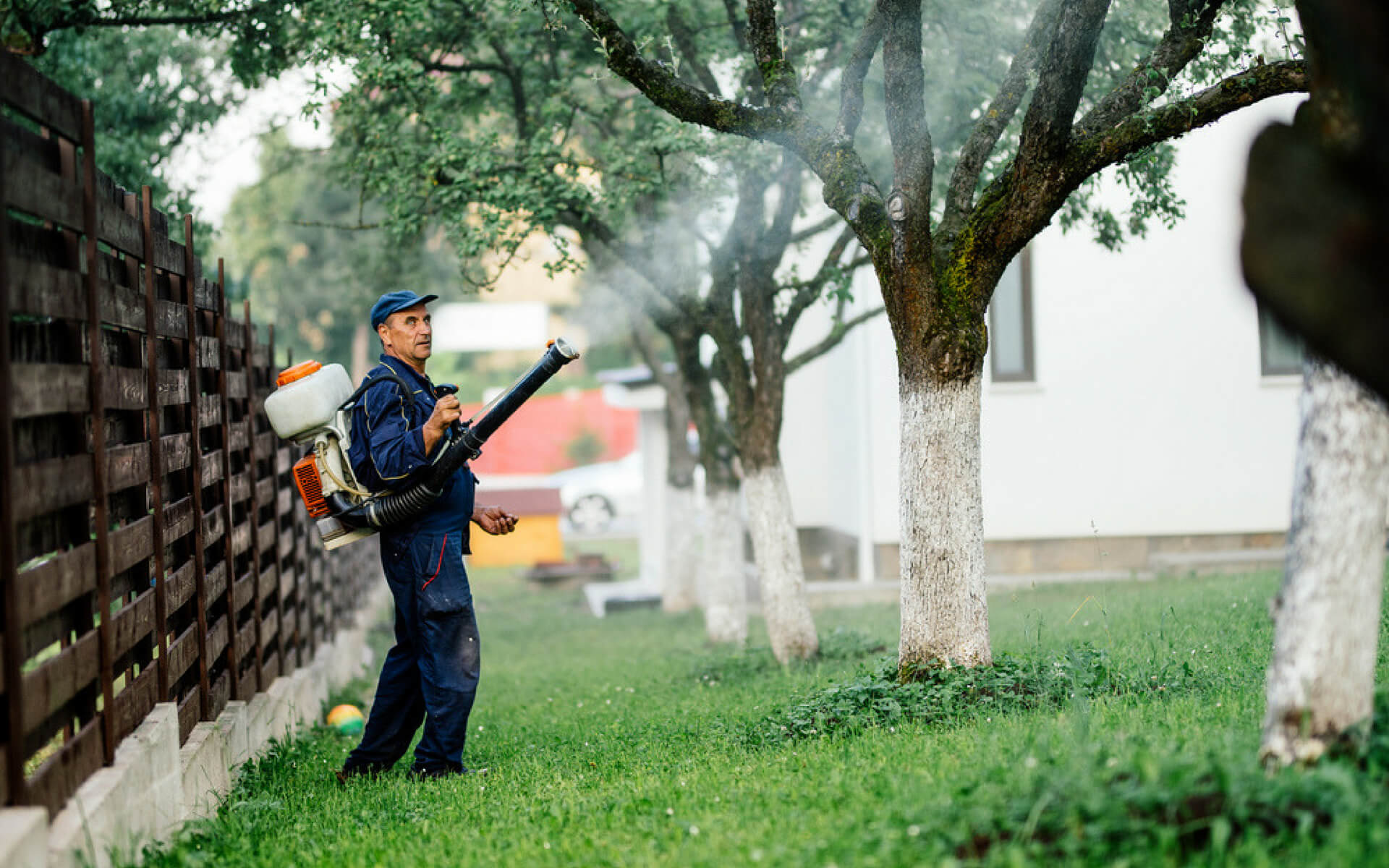 Come eseguire la disinfestazione del giardino per eliminare le zanzare