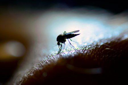 Consigli per eliminare le zanzare da giardini e terrazzi in modo naturale