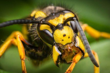 Diversi rimedi e accorgimenti per allontanare le vespe da casa
