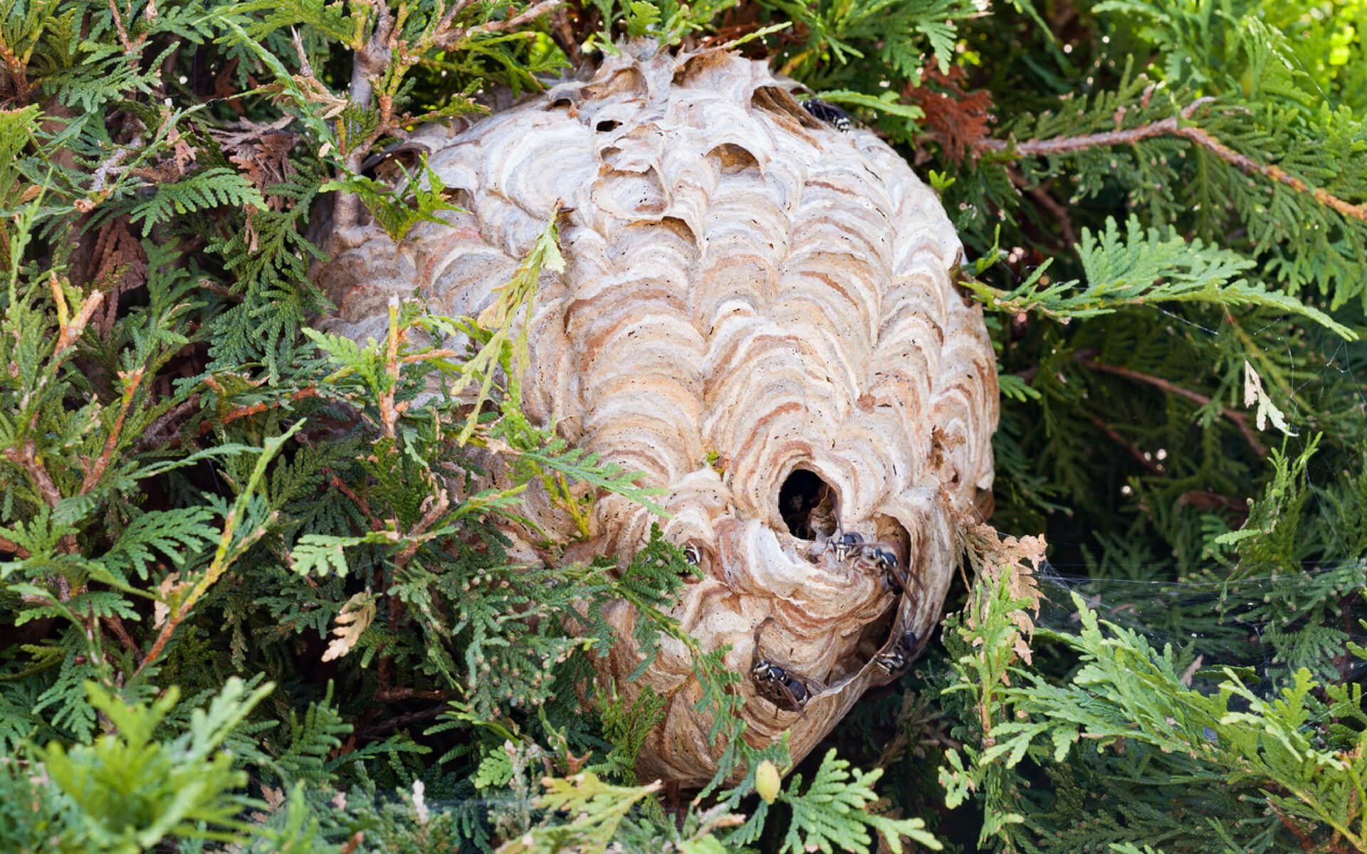 Per garantire la sicurezza del cane in giardino è fondamentale eliminare le vespe e il loro nido