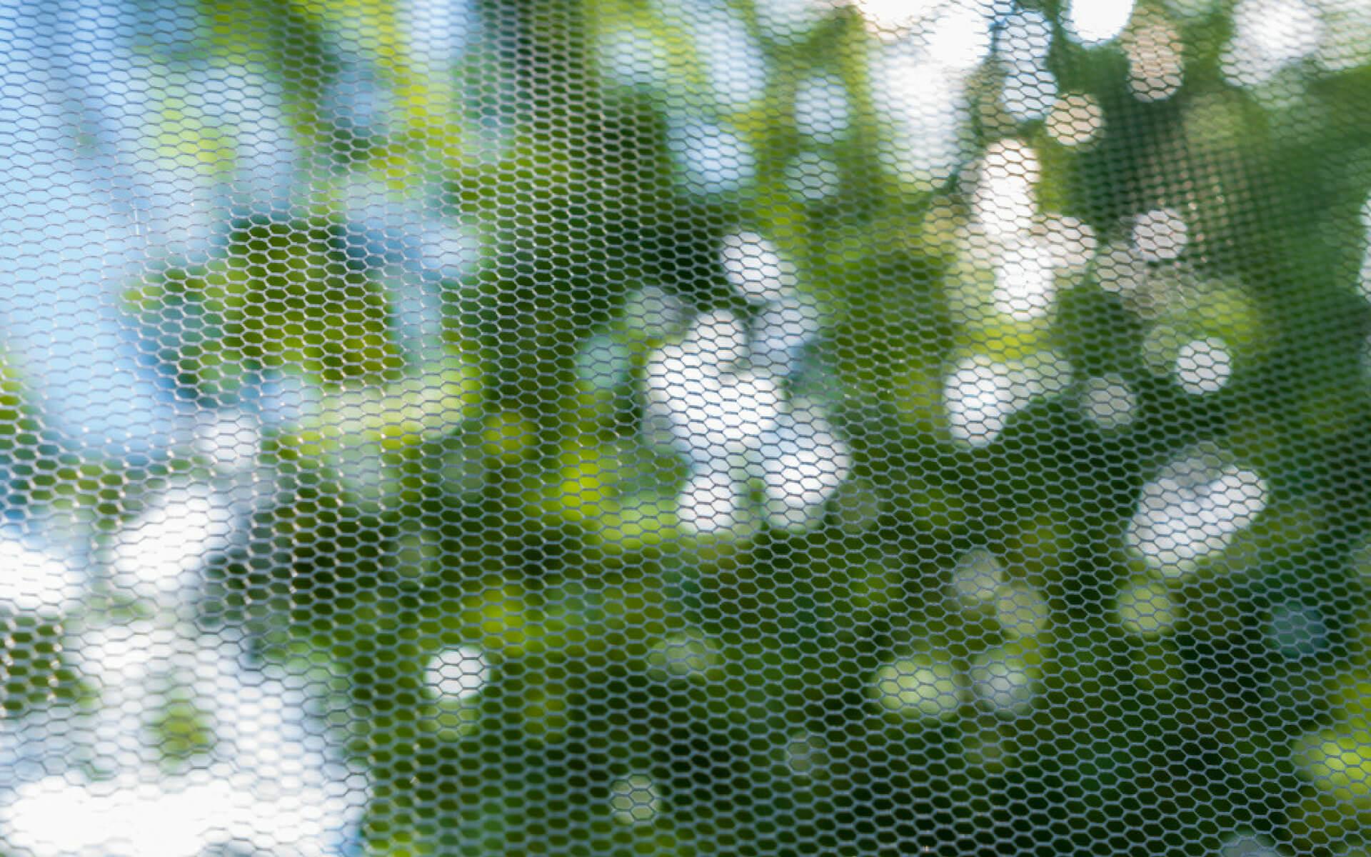 Installare delle zanzariere alle finestre è il rimedio migliore per eliminare le cimici da casa