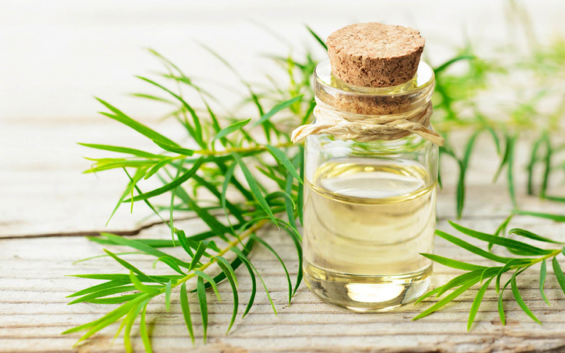 Il Tea Tree oil è un ottimo repellente naturale utili per combattere le cimici
