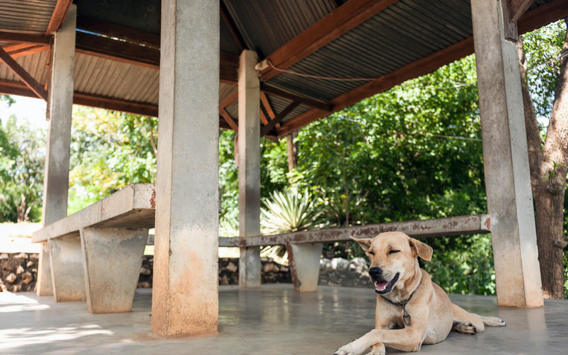 Creare una zona ombreggiata in giardino per proteggere il cane dal sole è fondamentale