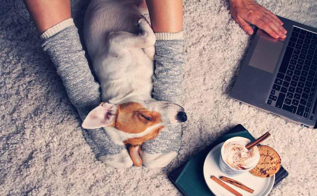 convivere con animali in casa