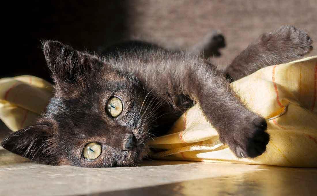 convivere con gatto in casa