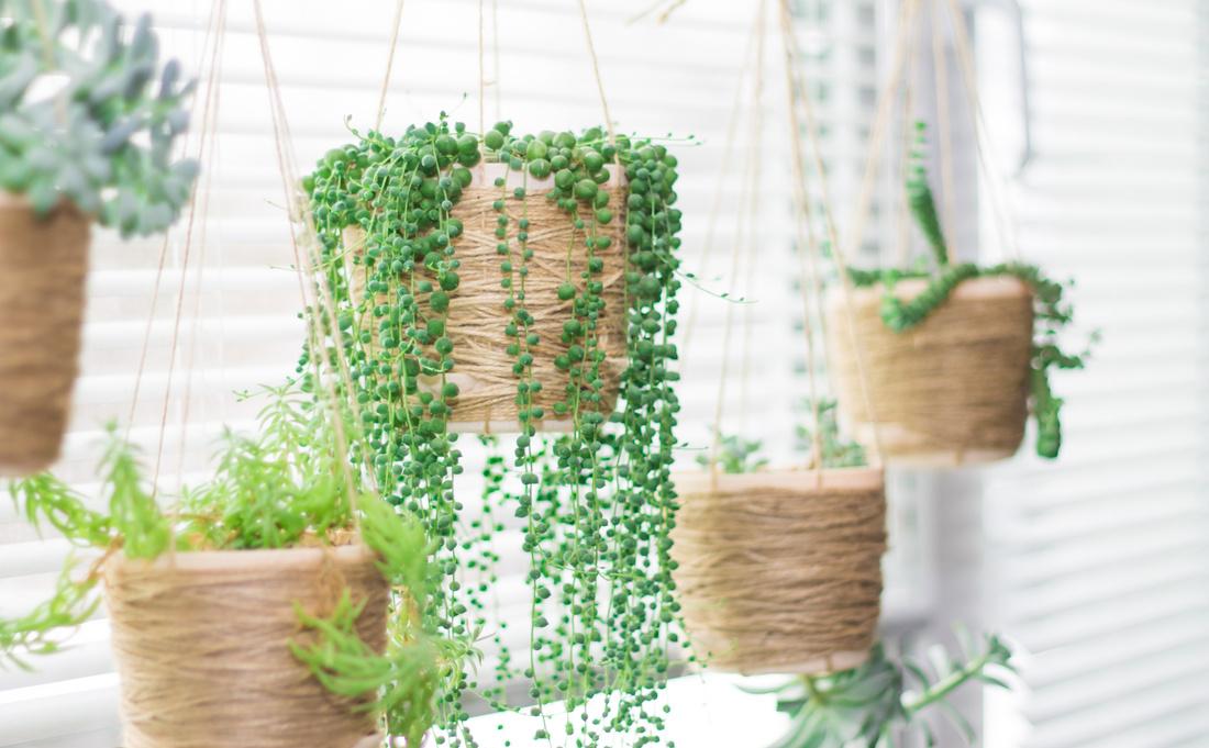 decorare finestre piante