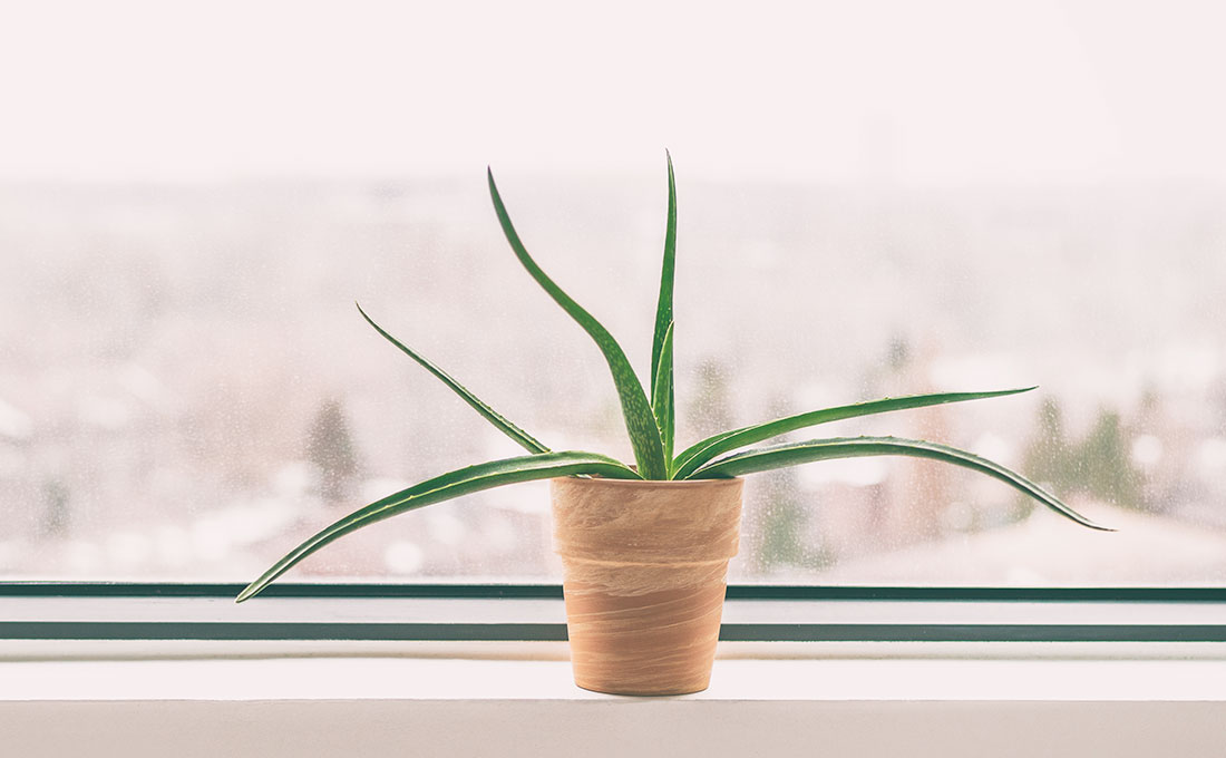 Verde in casa che purifica l'aria