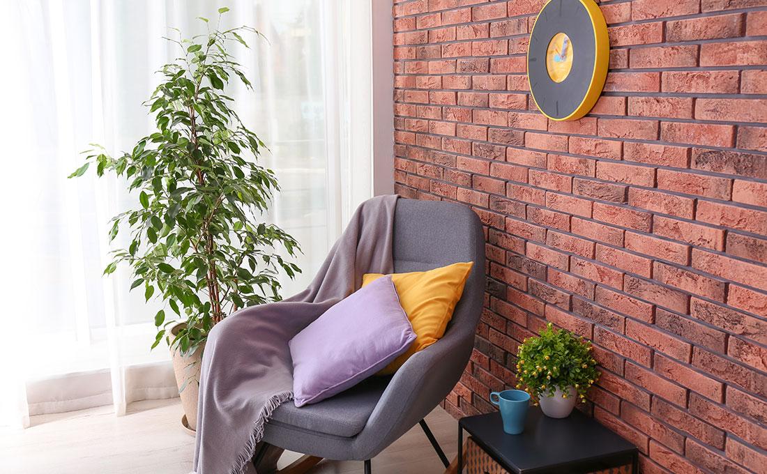 Diminuire il livello di umidità in casa con le piante