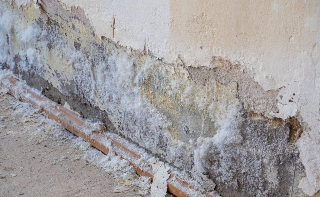 intonaco rovinato da muffa sui muri