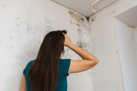 Elimina facilmente la muffa sui muri