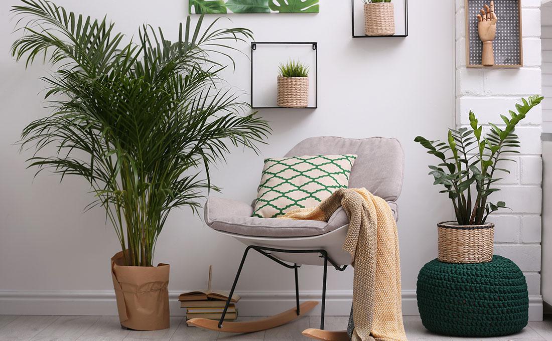 La luce giusta per le piante di casa