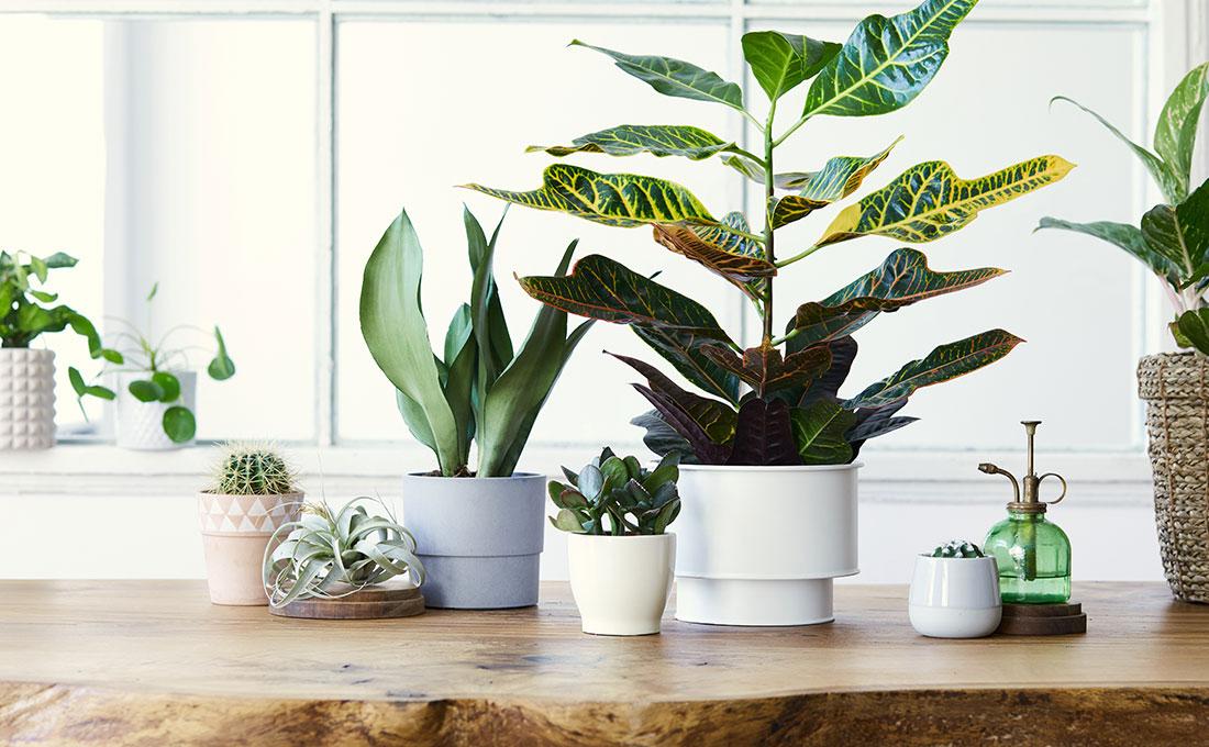 Consigli sulla scelta delle piante in casa